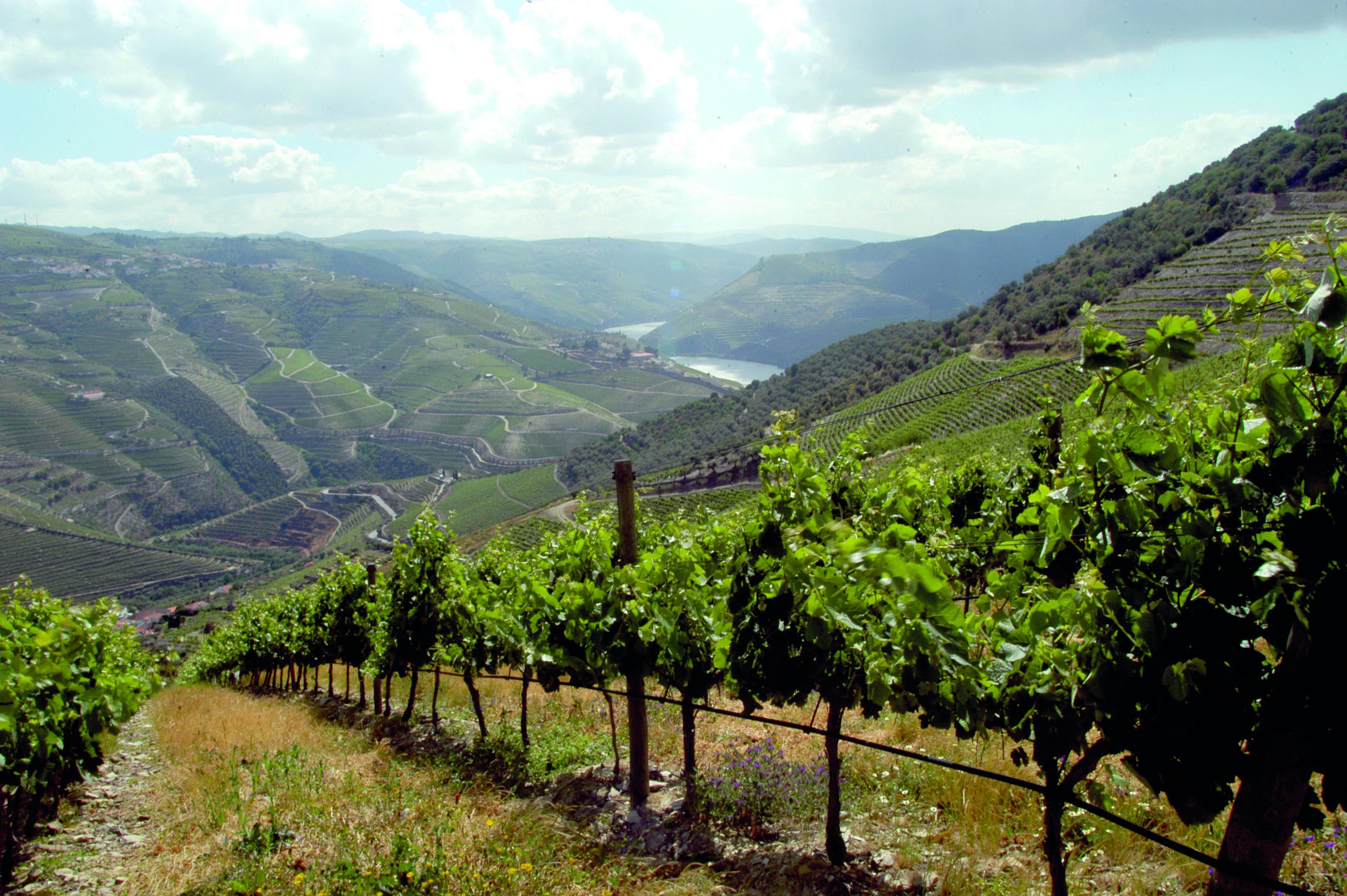Rota dos Vinhos: Douro, Verdes & Moscatel