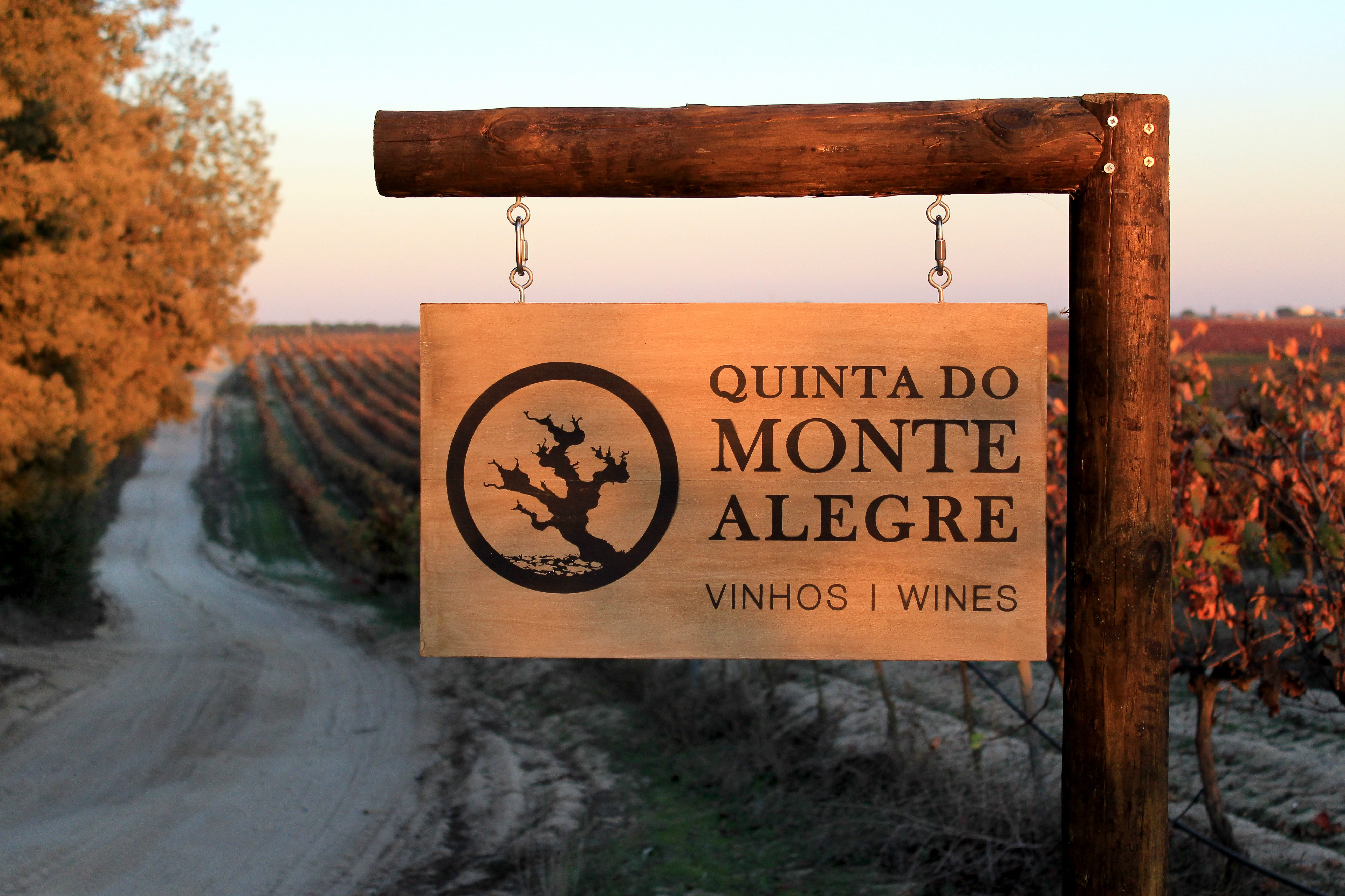 Quinta do Monte Alegre - Cata & Visita Guiada