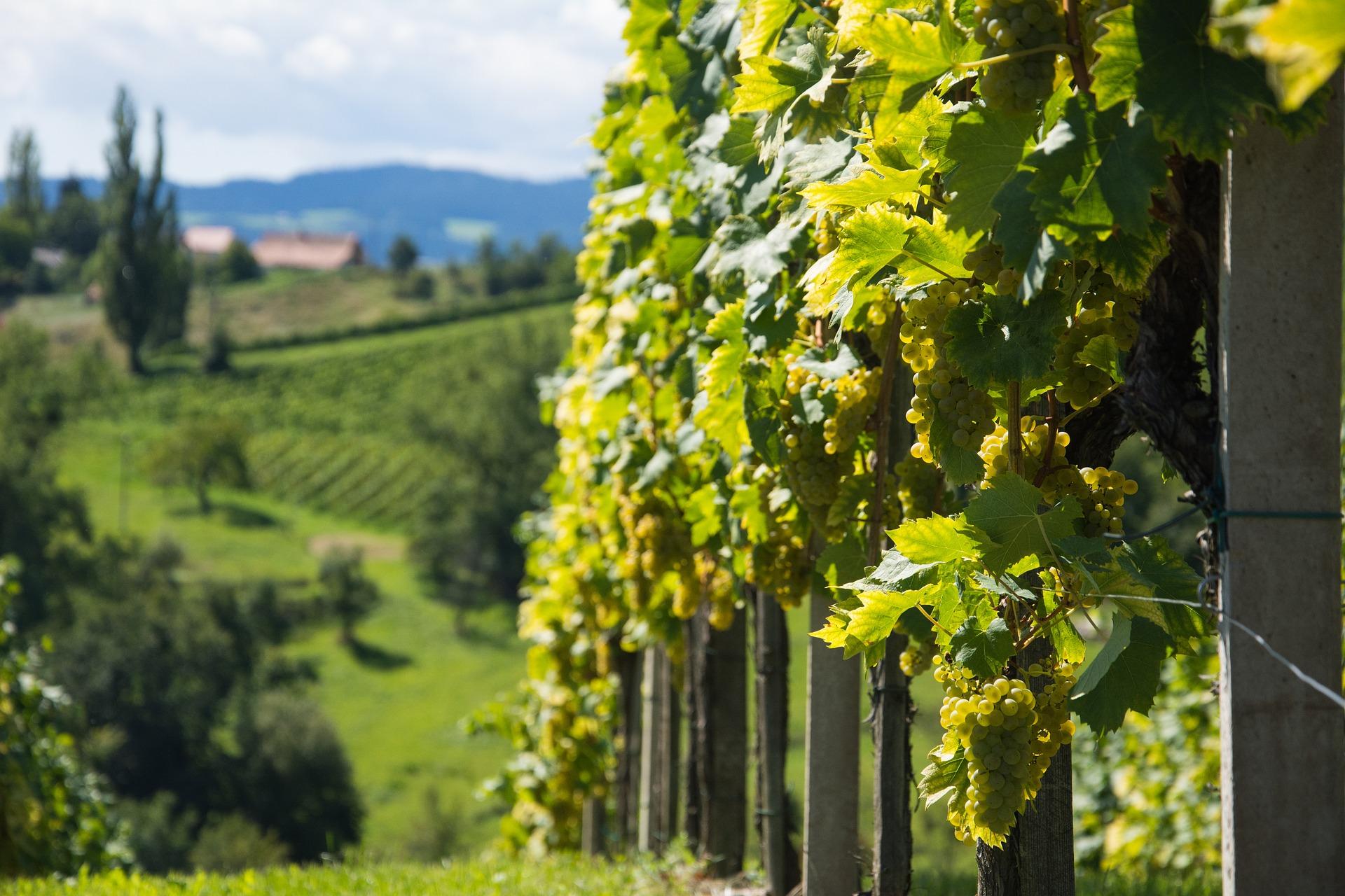 Tour pela Região dos Vinhos Verdes