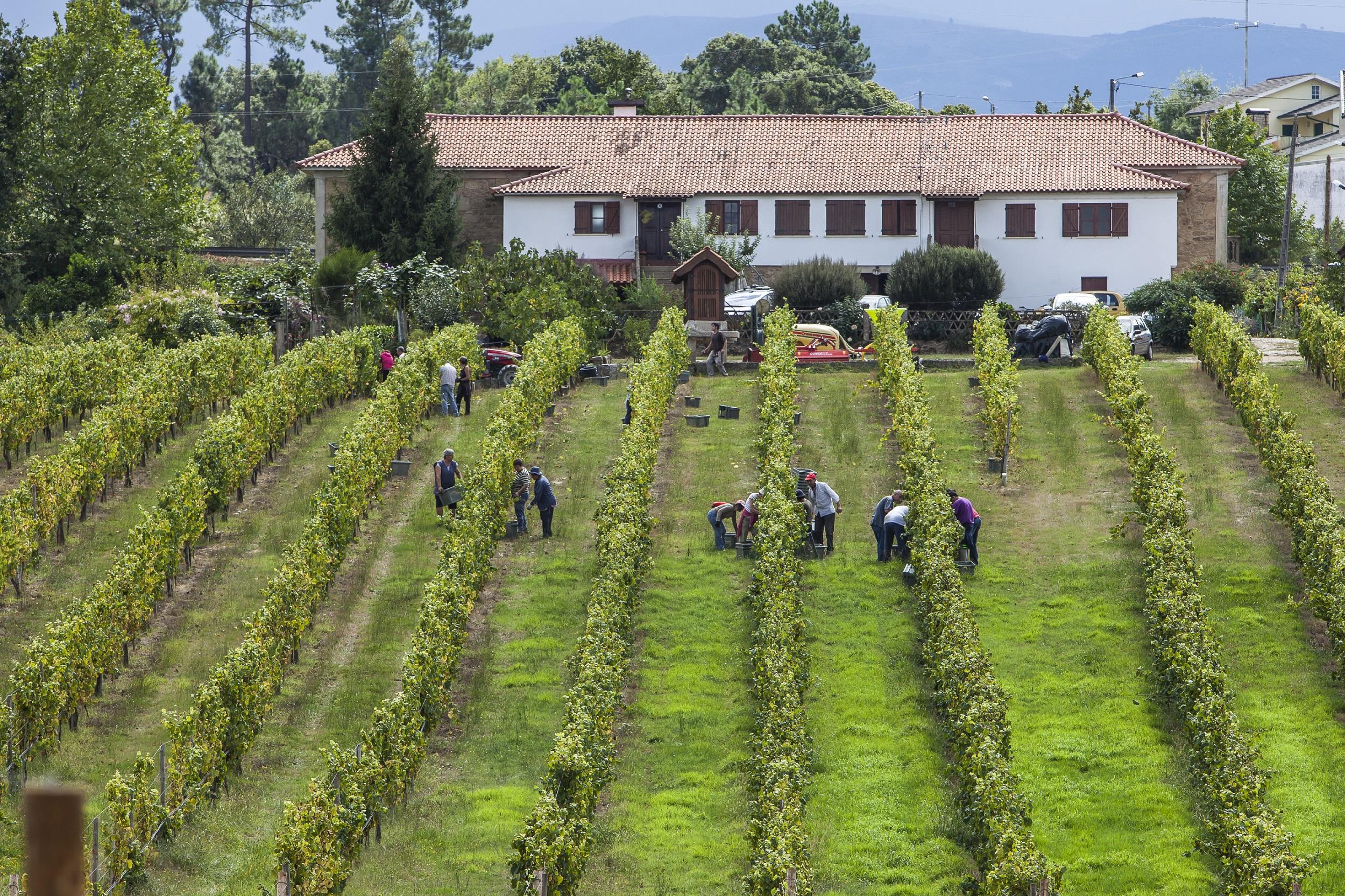 Quinta de Santiago - Grape Harvest Experience