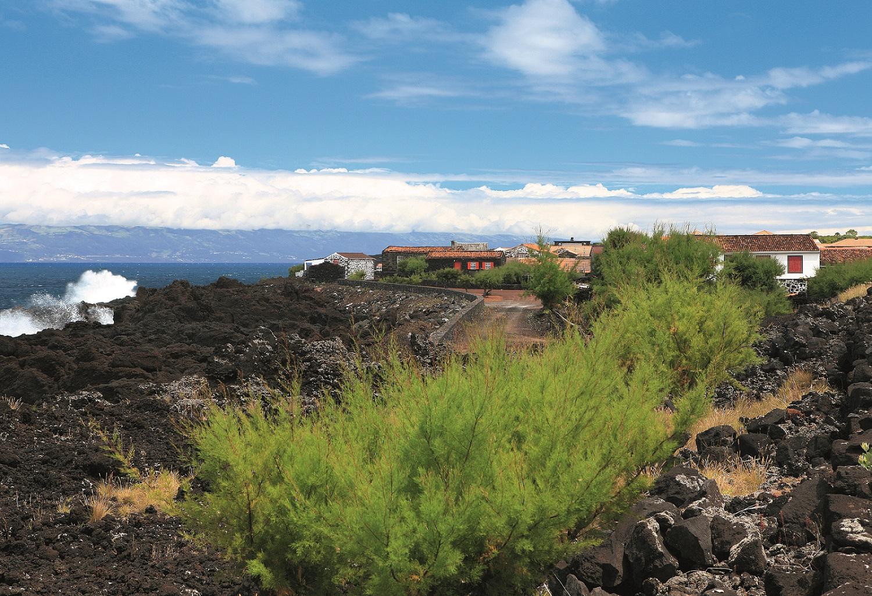 Camino Pedestre de la Cultura de la Viña del Pico