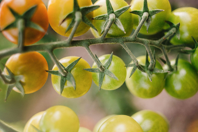 Quinta de Sant'Ana – Go Organic!