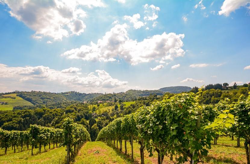 Bairrada Private Wine Tour